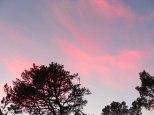 pinksky.gr.tree.1..lo