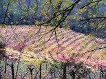 vineyard.11.14.1.lo